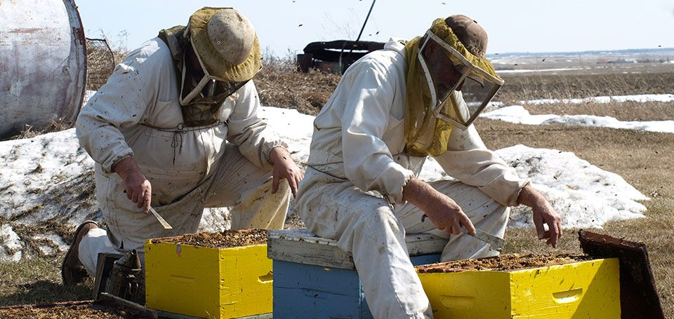 Bill Sr. and Jr. working in with the bees